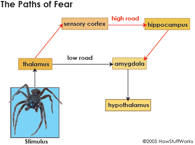 fear-7